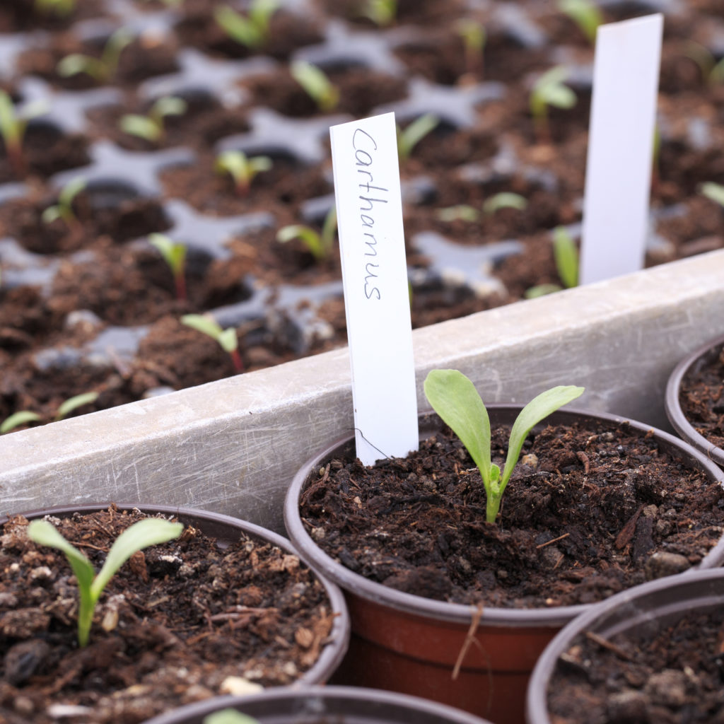 gartenvielfalt gärtnerei moor gmbh